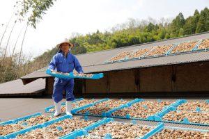 鳥取県の低温乾燥椎茸生産者様の画像