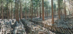 森と共にある原木椎茸栽培