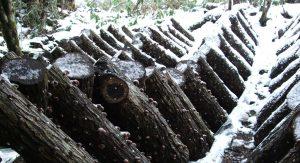 雪の中で育つ鳥取県産原木しいたけのホダ場画像