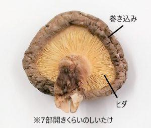 椎茸の部位の呼び方を解説する画像
